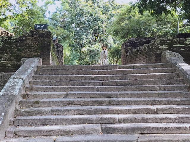 Sri Lanka Jasmine Tours & Drivers  スリランカジャスミンツアーズ撮影 ヤーパフワの犬と階段