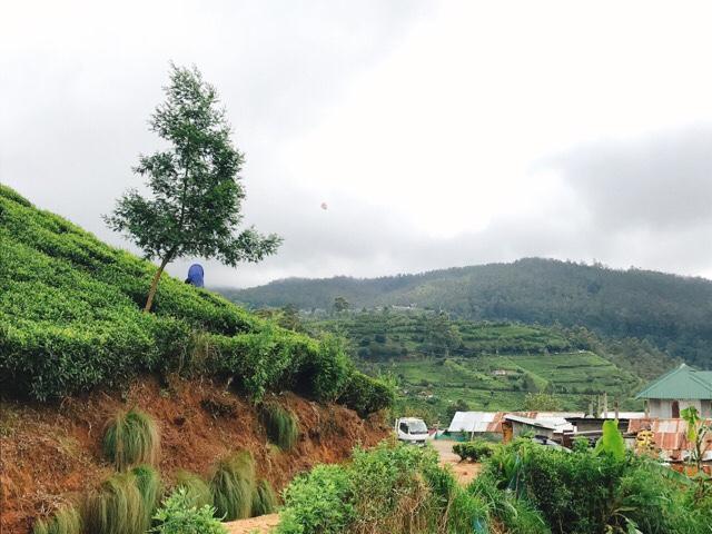 Sri Lanka Jasmine Tours & Drivers スリランカジャスミンツアーズ撮影。ヌワラエリヤの茶摘みのようす