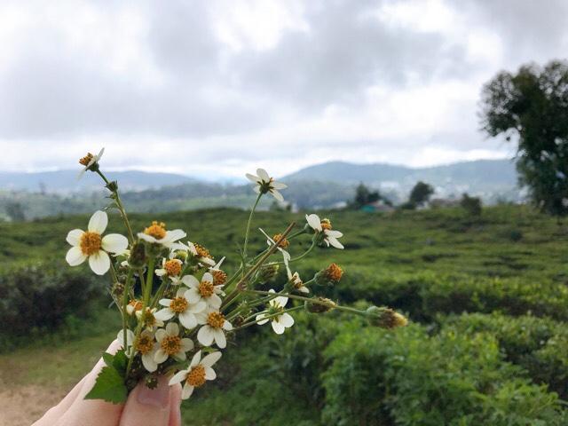 Sri Lanka Jasmine Tours & Drivers スリランカジャスミンツアーズ撮影。ヌワラエリヤで摘んだ野の花