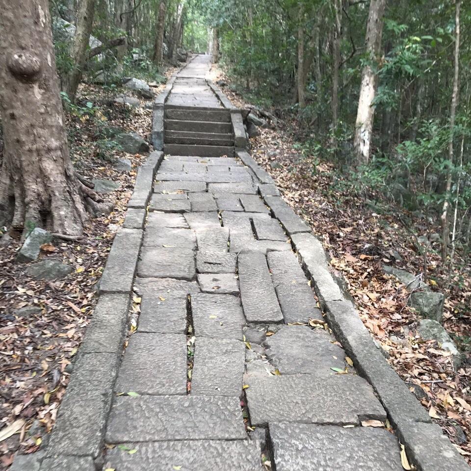 Sri Lanka Jasmine Tours & Drivers スリランカジャスミンツアーズ撮影。リティガラ遺跡のガジュマルの木