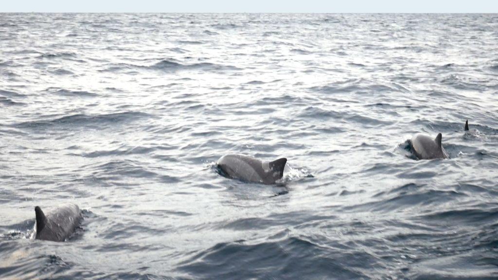 Sri Lanka Jamine Tours スリランカジャスミンツアーズ のお客様撮影。トリンコマリーでホエールウォッチング。10頭以上の群れのイルカも!