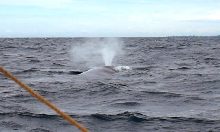 Sri Lanka Jamine Tours スリランカジャスミンツアーズ のお客様撮影。トリンコマリーでホエールウォッチング。シロナガスクジラも見られたよ